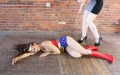 CALI The Wonder Woman KO Trap (11)
